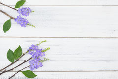Purple flowers and green leaves and brown branches. On white wood background with copy space Stock Images