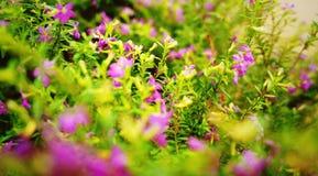 Purple Stock Photography
