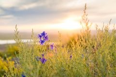 Purple Flowers and Green Weeds Royalty Free Stock Images