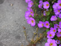 Purple flowers. Purple ground flowers Royalty Free Stock Image