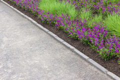 Purple flowers growing along the pathway Stock Photography