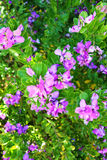 Purple flowers. Growing at a branch Royalty Free Stock Images