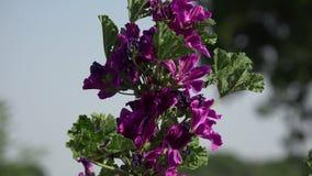 Purple flowers stock footage