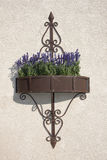 Purple flowers hanging on the wall in a metal flower box Royalty Free Stock Photography