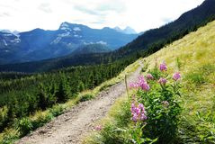 Purple flowers and hiking trail royalty free stock images
