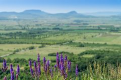 Purple flowers and hill in the background stock photos