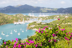 Purple Flowers on Hill with Yachts in Background Stock Image