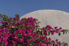 Purple flowers at house in Oia Stock Photography