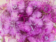 Purple flowers in ice Stock Photography