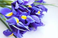 Purple flowers of irises stock photography