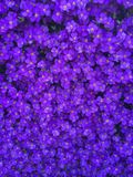 Purple Flowers. Just a flower in nature royalty free stock images