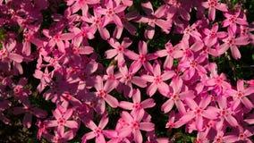 Purple flowers. 4K. stock footage
