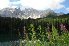 Purple Flowers at Lago di Carezza Karersee, a Beautiful Lake in the Dolomites, Trentino Alto Adige. Italy stock image