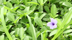 Purple flowers stock video footage
