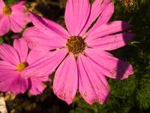 Purple flowers. Location uk gloucestershire , size 3712 2792, e-420 camera , 100 iso Stock Photography