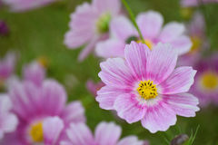 Purple flowers in lush green background Stock Photos