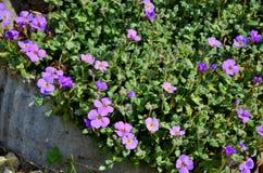 Purple flowers. Macro scene with purple flowers Stock Photos