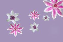 Purple flowers in mandala royalty free stock photography