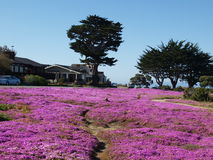 Purple flowers in meadow Stock Photography
