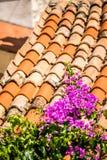 Purple flowers on Mediterranean roof tiles Royalty Free Stock Images