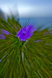 Purple Flowers with Motion Blur. Handheld shot of tropical flowers in Negril, Jamaica. Long exposure and zooming was used to achieve motion blur. Photoshop was Royalty Free Stock Image