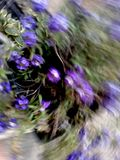 Purple flowers with natural distortion Stock Photo