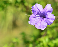 Purple Flowers on nature Royalty Free Stock Image