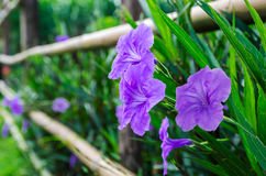Purple flowers in nature Stock Photos
