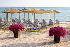 Purple flowers near wooden path to sea among umbrellas at sandy beach Royalty Free Stock Photo