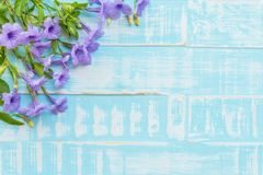 Free Purple Flowers On A Pastel Bright Blue Wooden Background Royalty Free Stock Photos - 113844878
