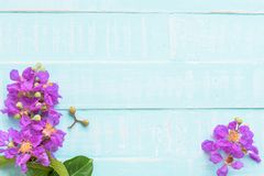 Purple Flowers on a pastel bright blue wooden background. Spring and summer concept royalty free stock photos