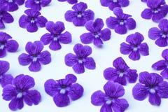 Purple flowers pattern background Stock Photos