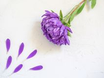Purple flowers and petals on white background. Creative beauty fashion cosmetics photo. Flat lay Stock Photos