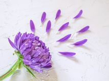 Purple flowers and petals on white background. Creative beauty fashion cosmetics photo. Flat lay Royalty Free Stock Photo