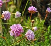 The purple flowers. Photo of purple flowers  - Póvoa de Santa Iria - Vila Franca de Xira - Portugal - March 2017 Stock Images