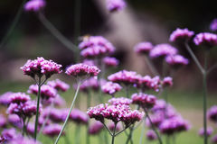 Purple flowers. On this photo you can see the beautiful purple forest flowers Stock Photos