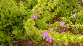 Purple flowers and Plants Growing in Garden Stock Photo