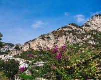 Purple Flowers by Positano Mountain Royalty Free Stock Photos
