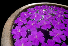 Purple flowers in a pot. Purple flowers filling the surface of a water filled in an earthen pot on a black background Stock Images