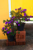 Purple flowers in pot Stock Photography