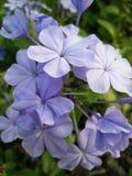 Purple flowers. In public garden Stock Photo