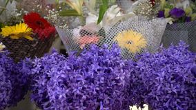 Purple flowers. And beautiful background and hyacinth stock footage