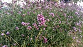 Purple flowers. In the garden stock image