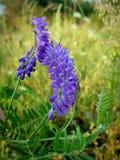 Purple flowers. Garden summer nature stock photo