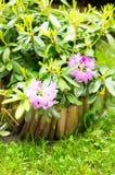 Purple flowers rainy day Royalty Free Stock Photography