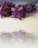 Purple flowers with reflection. Purple flowers closeup, with its reflection and space for text (copyspace Stock Photo