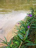 Purple flowers beside the river royalty free stock photography