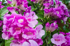 Purple flowers shooting close. Royalty Free Stock Images