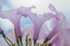 Purple flowers and sky Royalty Free Stock Photos