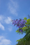 Purple Flowers and Sky Royalty Free Stock Image